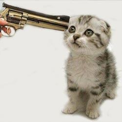 2690962-4745531338-kitte